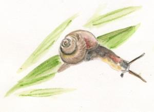 Les escargots au jardin