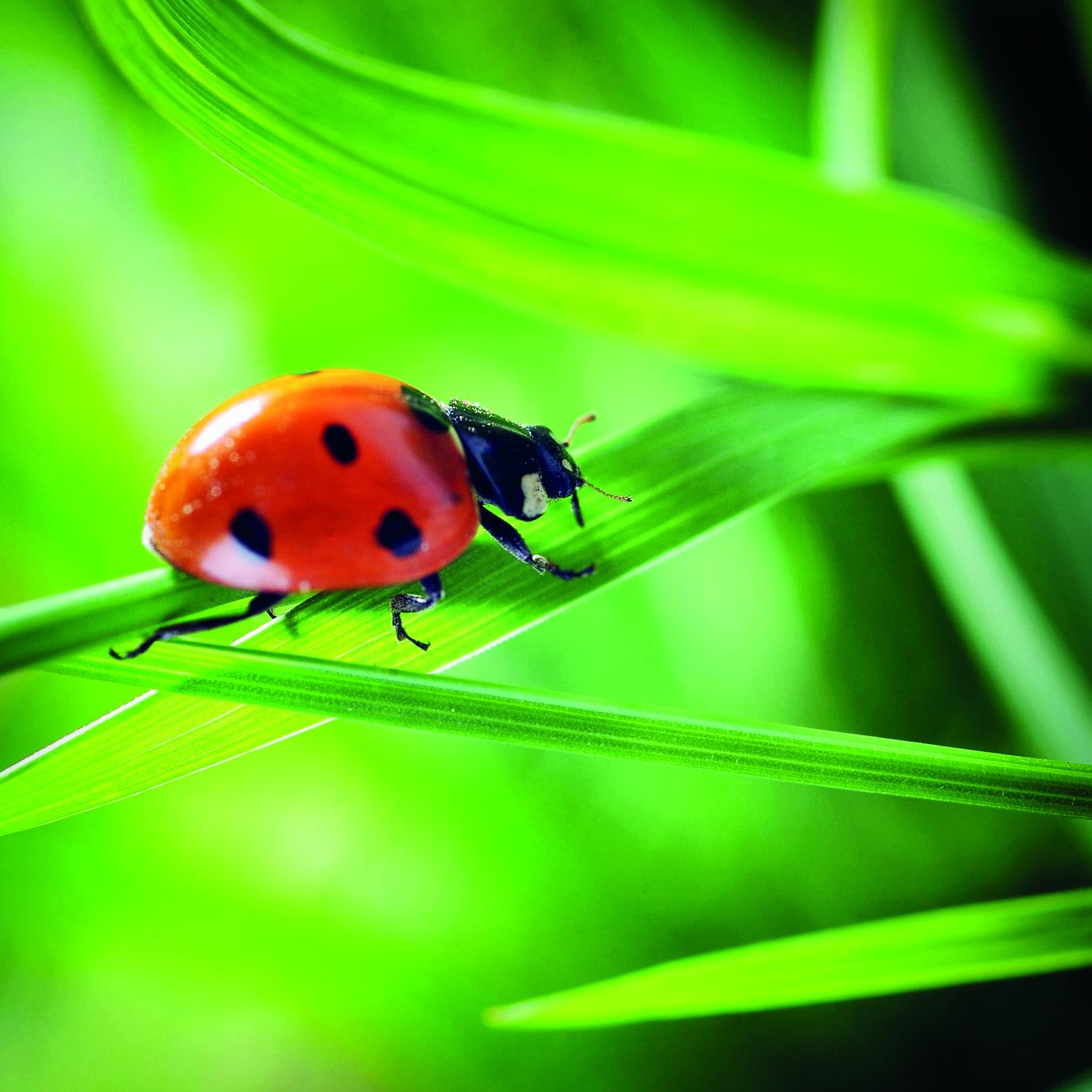 l h tel insectes petit paradis des jardins blog oleomac. Black Bedroom Furniture Sets. Home Design Ideas