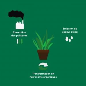 Action des plantes dépolluantes