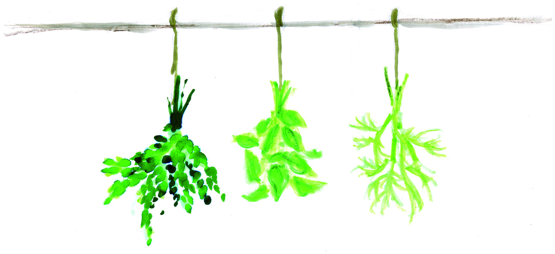 Les plantes aromatiques 2 conserver et cuisiner blog oleomac - Herbes aromatiques cuisine ...