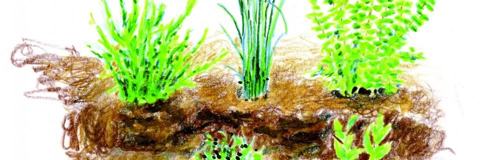 entretenir ses herbes aromatiques en hiver blog oleomac. Black Bedroom Furniture Sets. Home Design Ideas