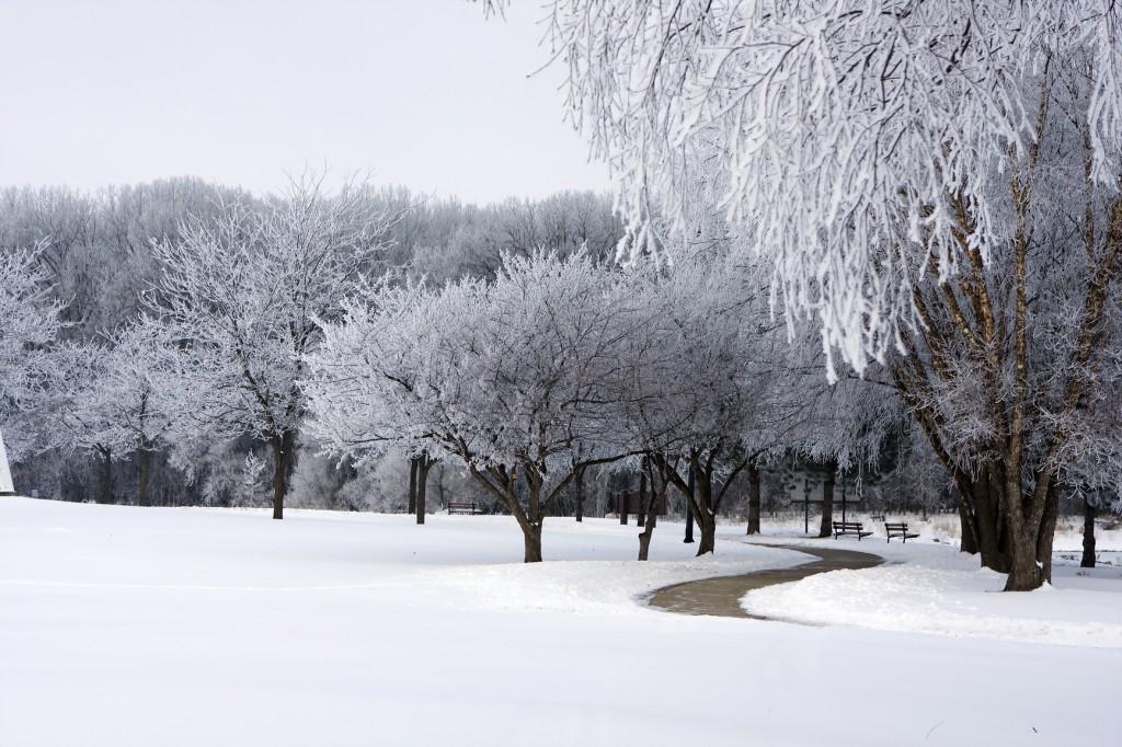 Les v g taux qu on ne doit pas tailler en hiver blog oleomac - Quand doit on tailler les coniferes ...