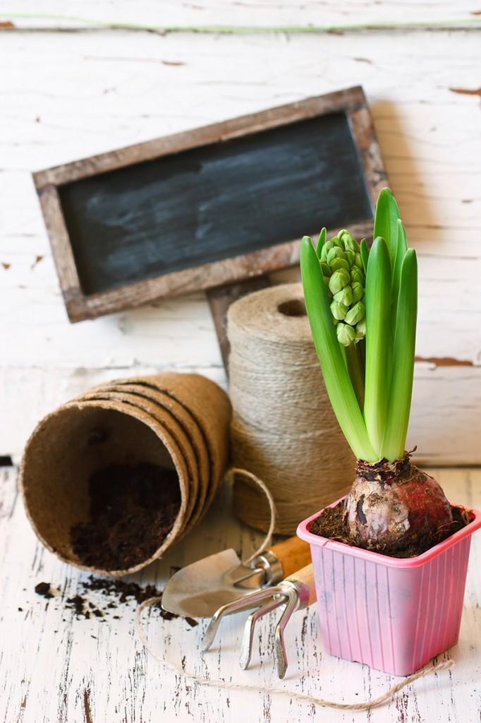 outils de jardin et étiquette en ardoise