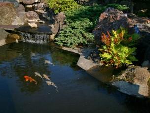 Jardin japonais bassin eau