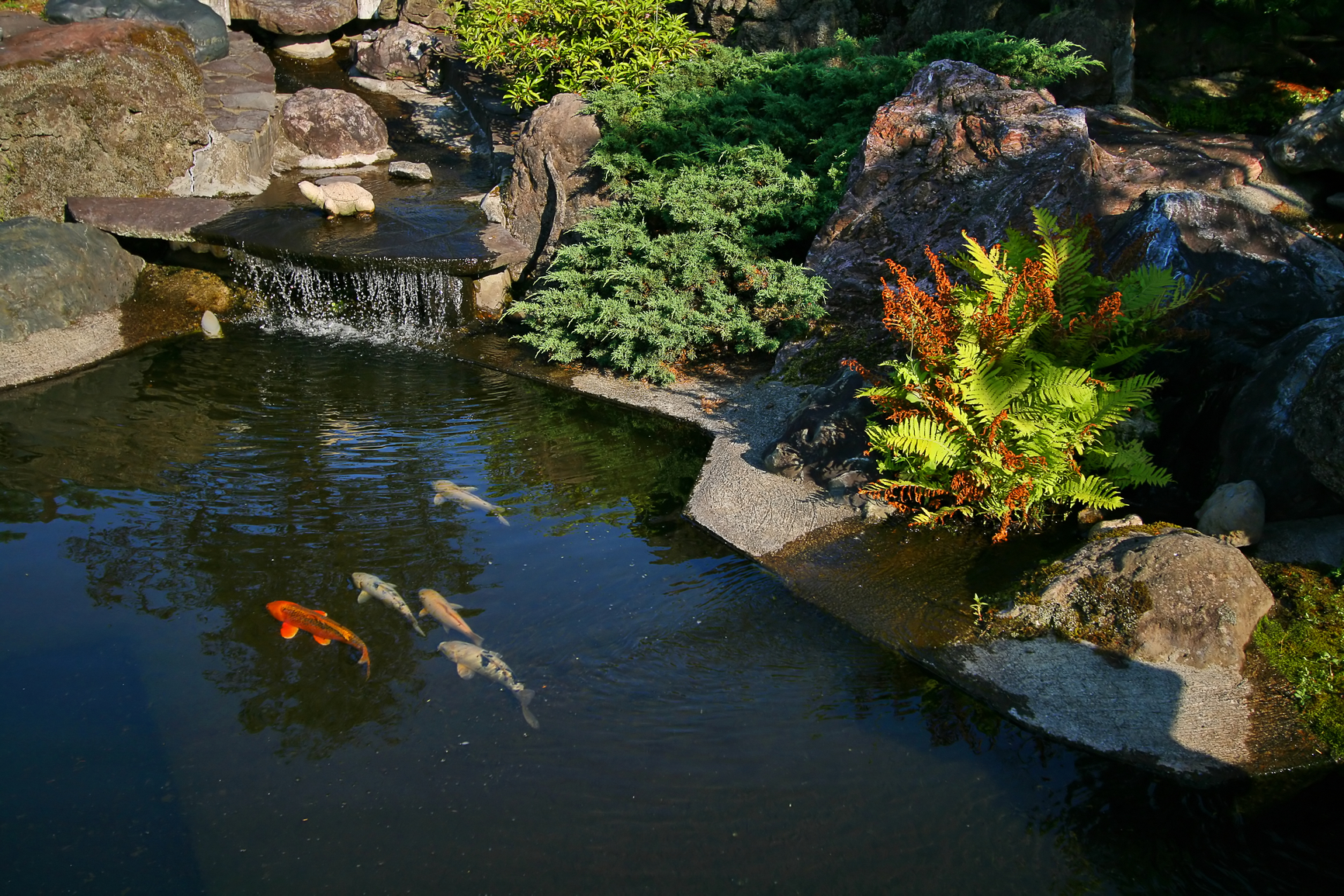 Bassin japonais for Japan koi pool