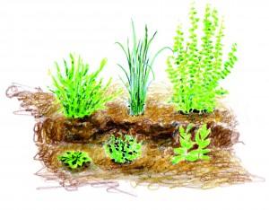 Plantation de simples : herbes médicinales