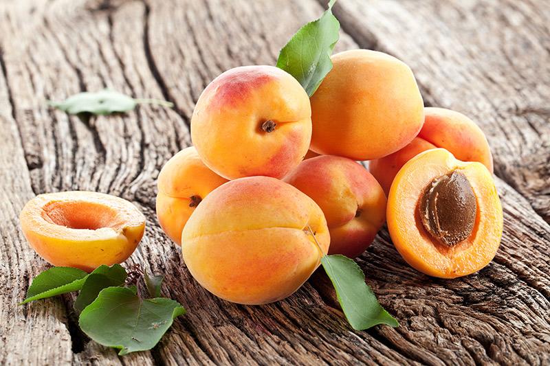 comment planter noyau abricot