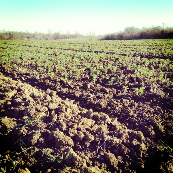 La base de la r ussite au jardin le travail de la terre - Labourer la terre ...