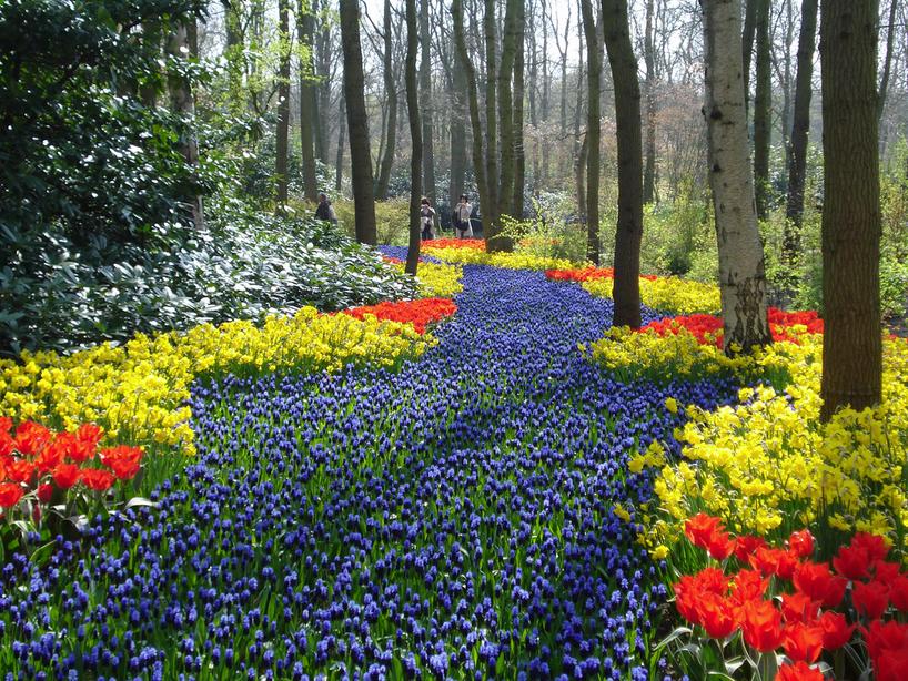 Les jardins remarquables d europe 2 jardin de keukenhof for Jardin keukenhof