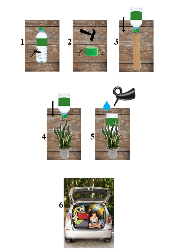 vacances conseils de survie pour plantes sans jardinier blog oleomac. Black Bedroom Furniture Sets. Home Design Ideas