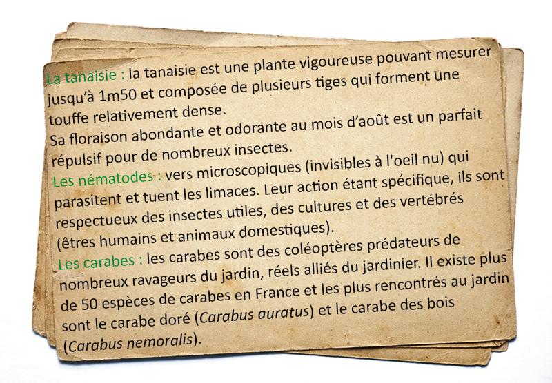 Glossaire limaces