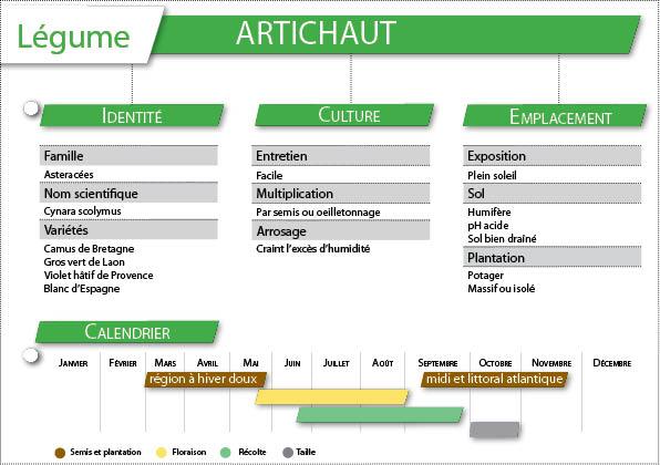 La culture de l'artichaut