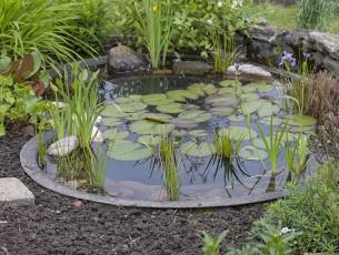 bassin-d'eau-nenuphars