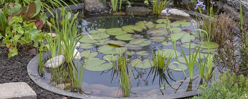 Les espaces d 39 eau le bassin blog oleomac - Comment creuser un bassin ...