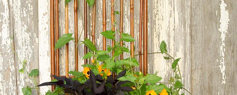 comment bien tuteurer les plantes et les arbres blog oleomac. Black Bedroom Furniture Sets. Home Design Ideas