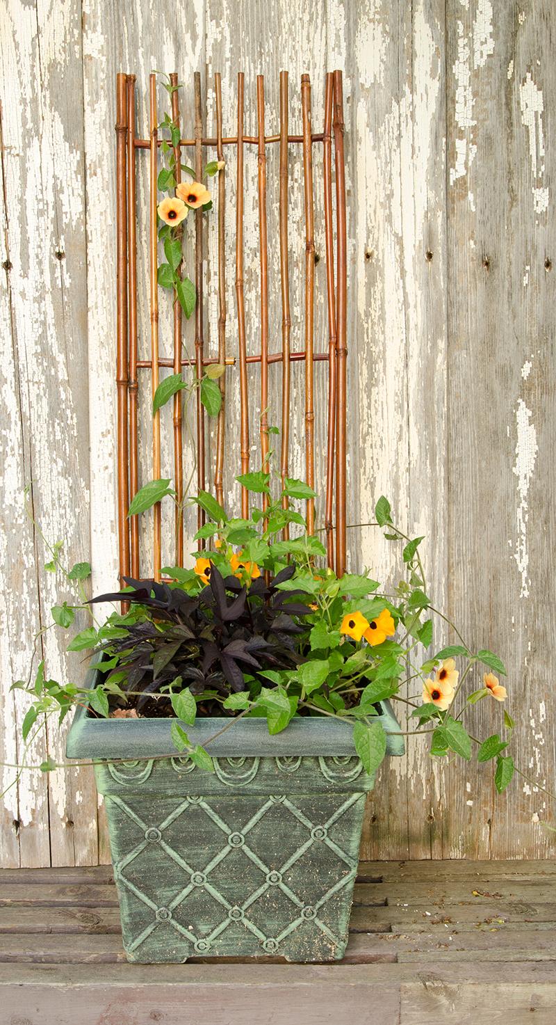 Prenez De L Altitude Au Jardin Grace Au Treillage Blog Oleomac