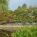 mur-vegetal-exterieur