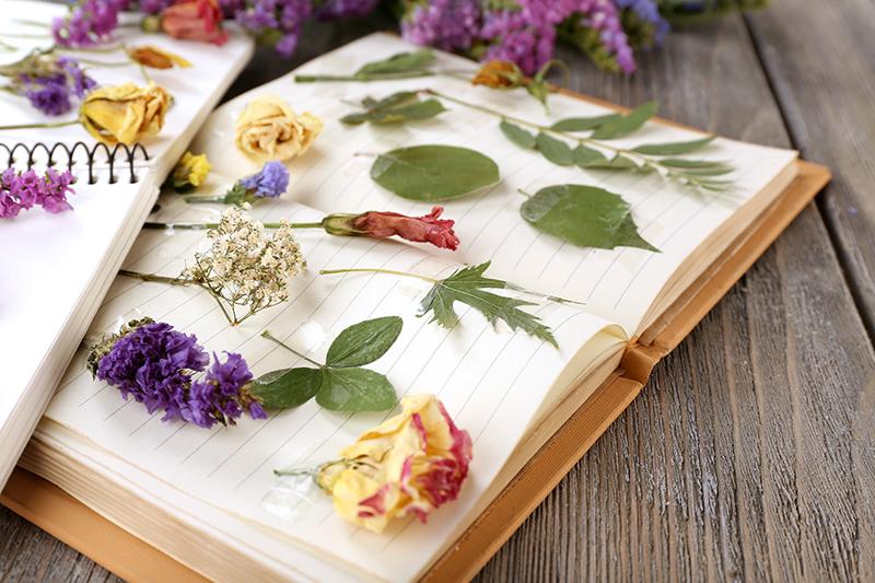 herbier fleurs