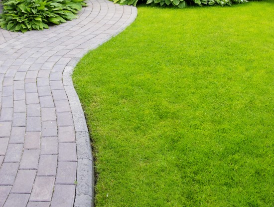 chemin jardin herbe pelouse