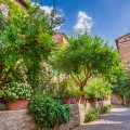 jardin mediterraneen allee
