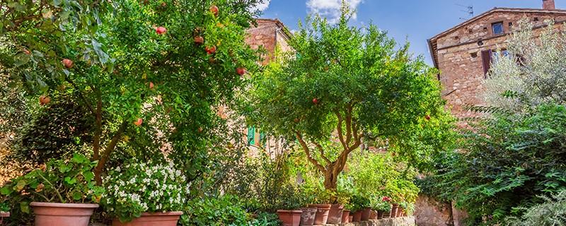 Le jardin méditerranéen | Blog Oleomac