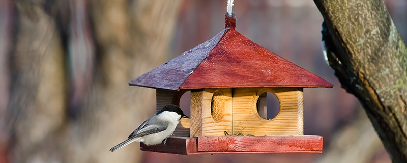 abri oiseau hiver