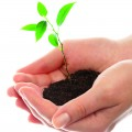 ETE_PRI_terre_pousse_plante_mains