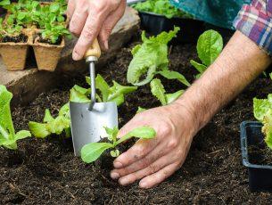 plantes-travaux-manuels