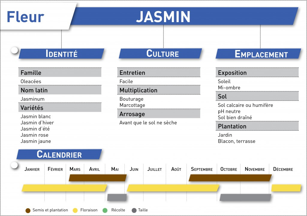 jasmin fiche telechargeable