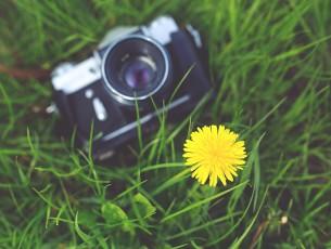 appareil photo fleur herbe
