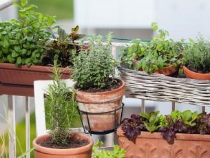 balcon jardiniere pot