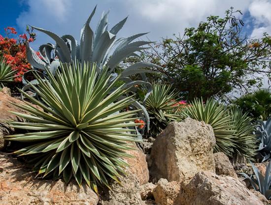 rocaille jardin sans eau