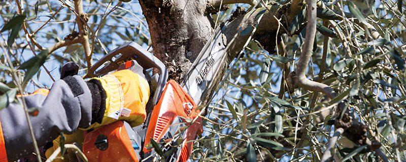 GST 250 OM situation arbre