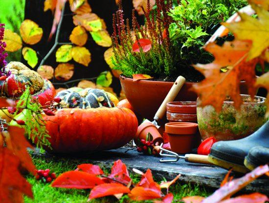 jardin potiron automne