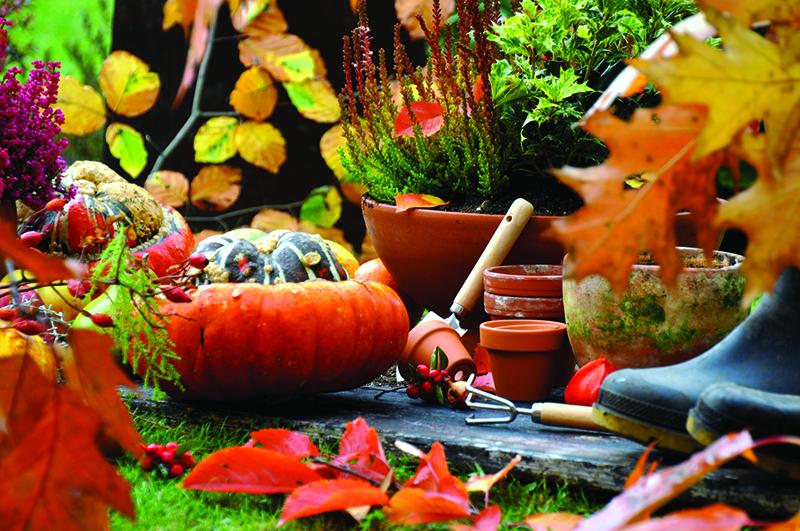 Pour Halloween Cultivez Des L Gumes G Ants Blog Oleomac