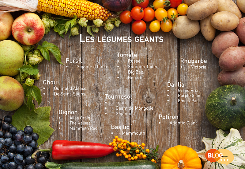 Les legumes geants
