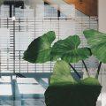 plante verte interieur
