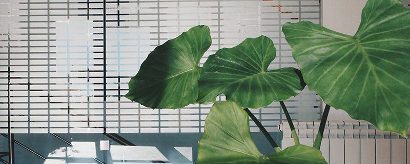 Les plantes vertes d 39 int rieur le nettoyage blog oleomac for Les plantes vertes