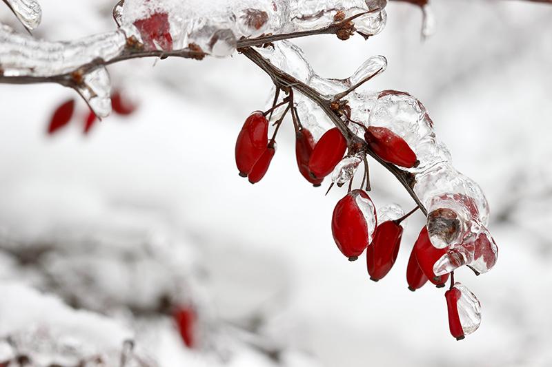 baie gel hiver