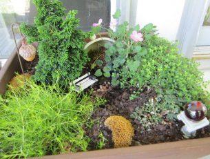 mini jardin DIY Photo credit moonlightbulb via VisualHunt.com CC BY