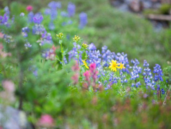 Jardin botanique alpin - photo by Dana Critchlow