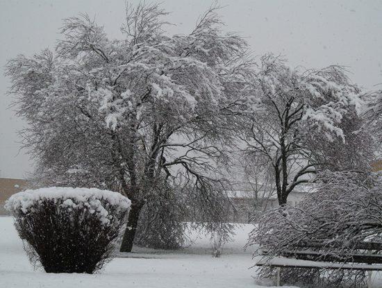 arbre neige rustique