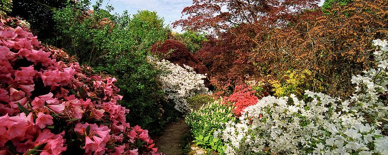 fleur jardin Photo credit ukgardenphotos via VisualHunt CC BY-NC-ND