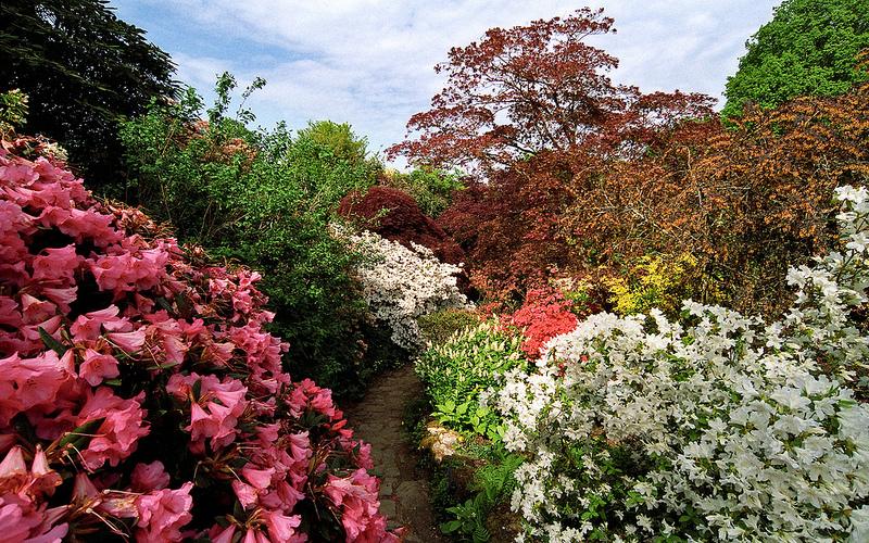 fleur jardin Photo credit ukgardenphotos via VisualHunt CC BY-NC-ND