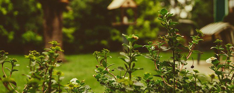 jardin photo credit martin-knize-38234