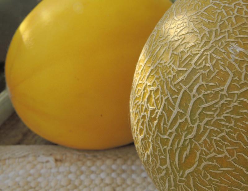 Fin f vrier les melons s 39 installent sous serre blog oleomac - Quand recolter les melons ...
