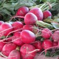 Radishes by nola.agent is licensed under CC BY 2.0