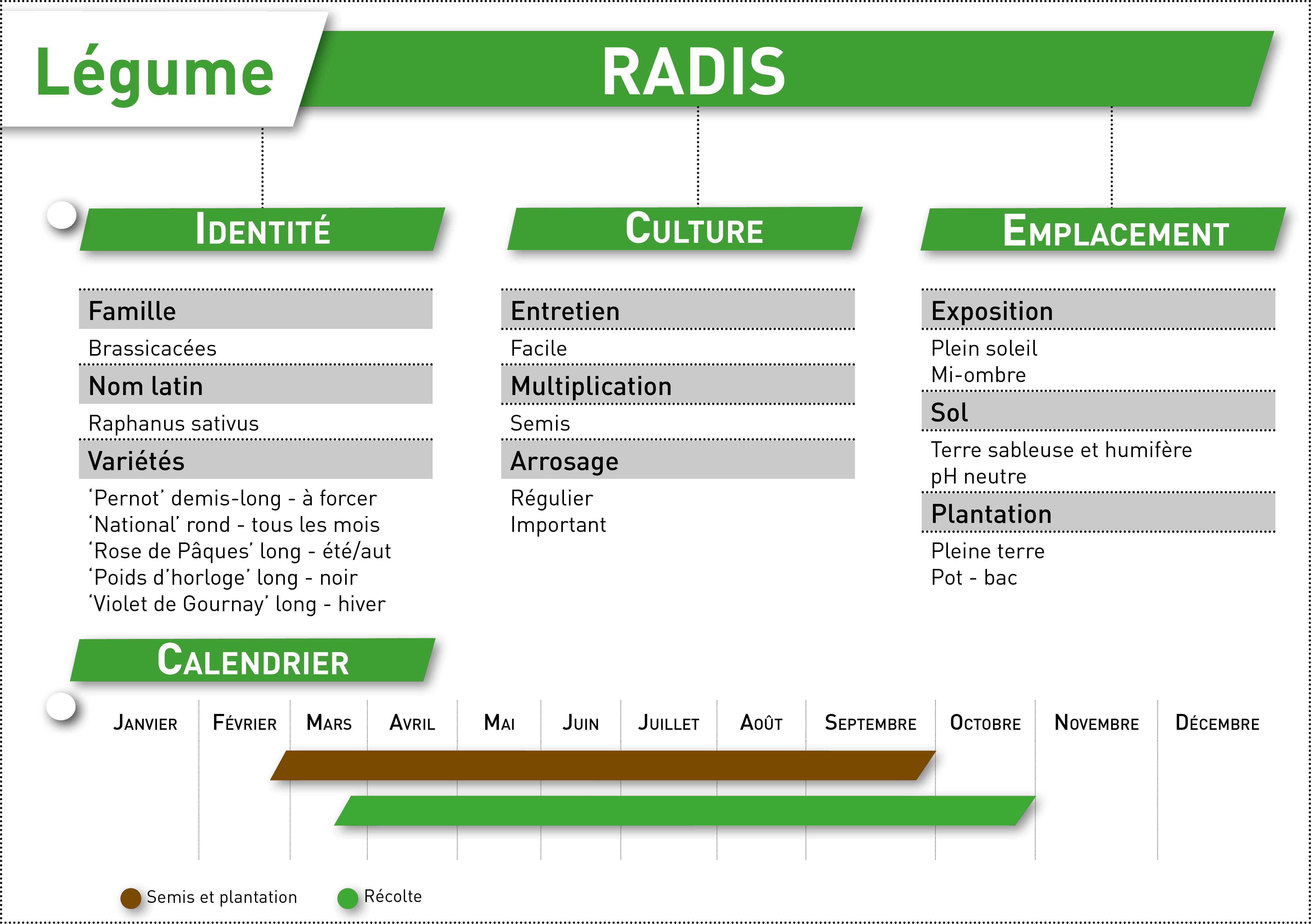 radis