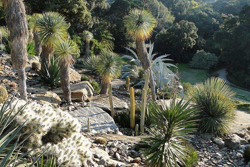 Jardin d'Amerique aride © Domaine du Rayol