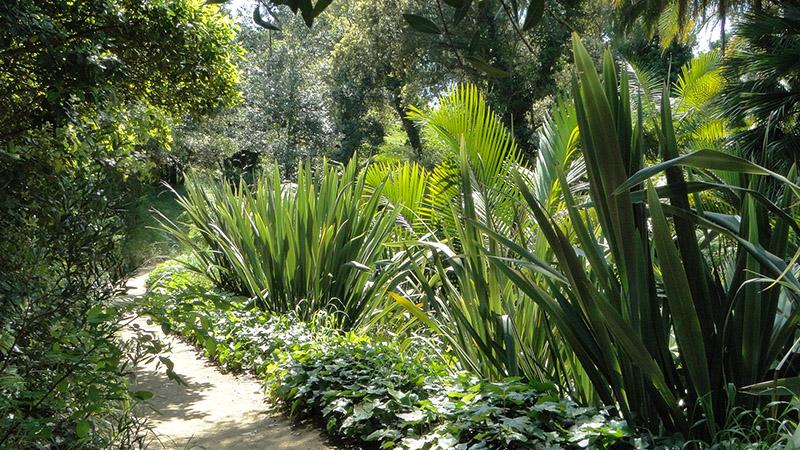 Jardin de Nouvelle-Zélande © Domaine du Rayol